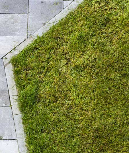 Empire Yard Services Lawn Dethatching