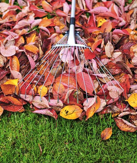 Empire Yard Services Fall Clean Up